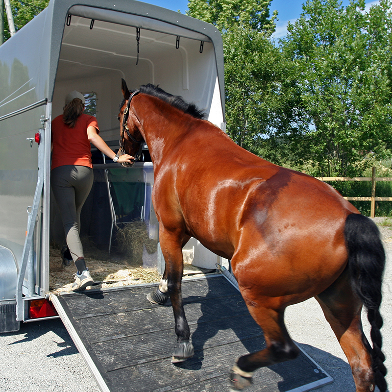 A woman leads a horse into a horse trailer